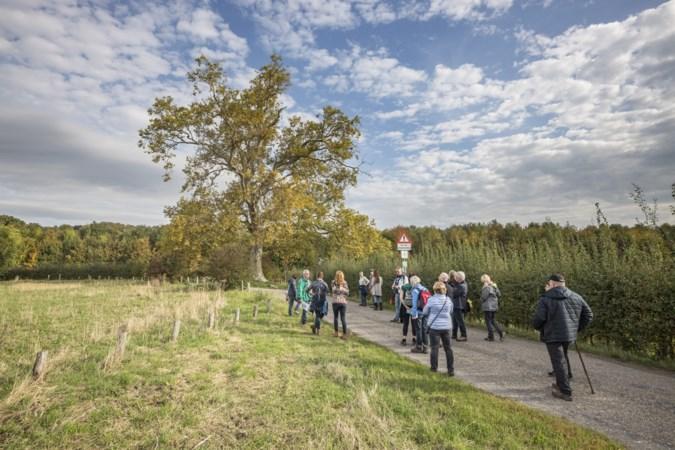 Geen plek op gemeentelijke monumentenlijst Heerlen voor bijzondere boom; de 'dikke eik van Terworm' is al afdoende beschermd