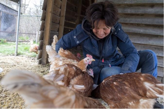 Eerste Limburgse opvang in Horn: 'Koop geen eieren voor Pasen, maar red een legkip'
