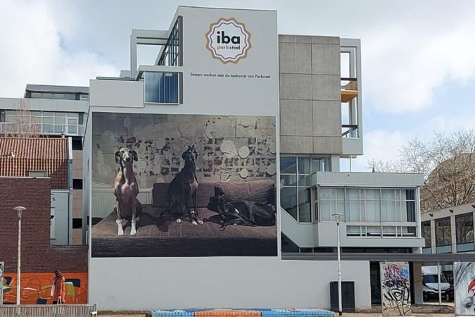 Gigantische foto van geadopteerde Spaanse windhonden siert gevel voormalig Rabobankkantoor in Heerlen
