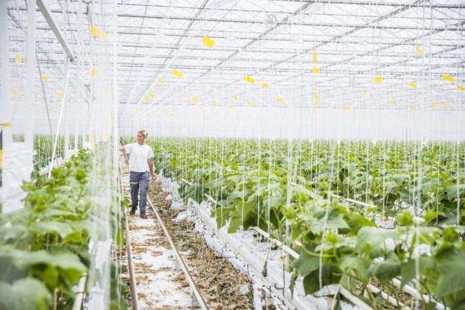 Wethouder wil inzetten op taalles, de juiste huisvesting en integratie voor arbeidsmigranten in Horst aan de Maas