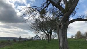 UitWandelen: speuren naar lammetjes en lentebloesems in buurtschap Cottessen