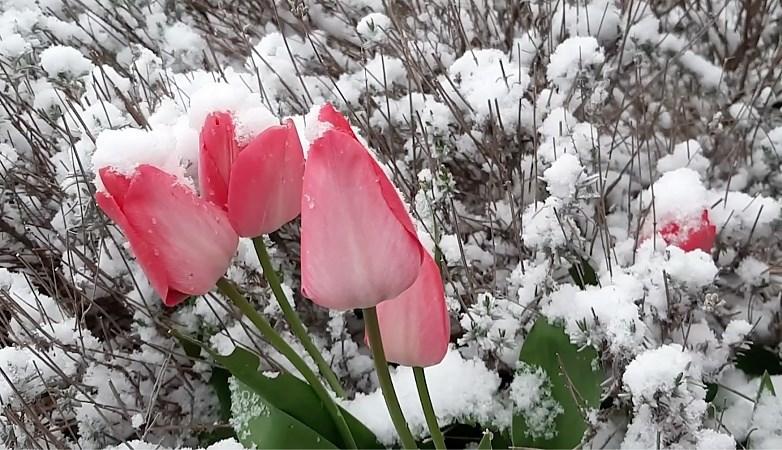 Video: Nederland kleurt wit, mogelijk tot tien centimeter sneeuw in Limburgse heuvels