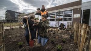 Leerlingen planten voedselbosje bij hun school in Geleen