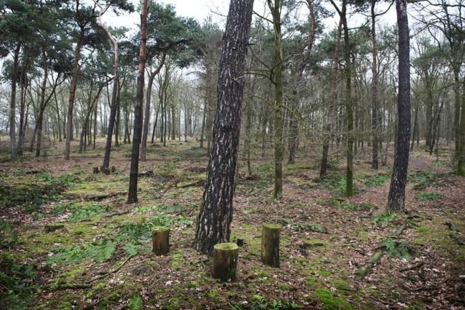 Bedenkingen bij uitbreiding natuurbegraafplaats Heide