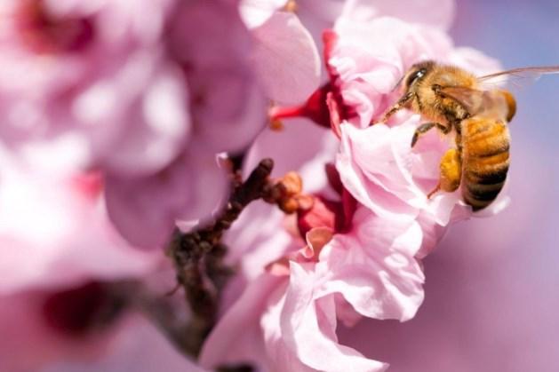 Vierde nationale bijentelling op 17 en 18 april in teken van veiligheid, voedsel en verblijf