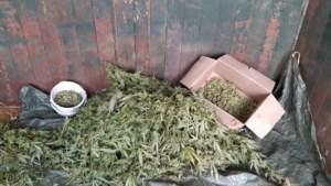 Sterke henneplucht leidt agenten naar paardenstal in Boekend