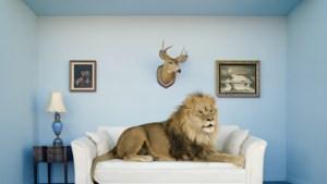 Zo maak jij van je huis een smaakvolle urban jungle en geen overvolle dierentuin