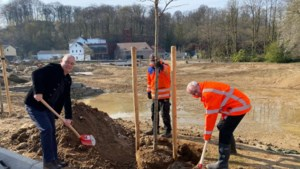 Boom geplant ter afsluiting werkzaamheden hoogwatergeul Valkenburg