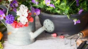 Hoge prijzen stuwen export bloemen en planten naar record