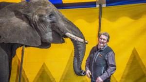 Circusolifant Buba mag blijven in Beringe, maar dierenrechtenorganisaties geven strijd niet op