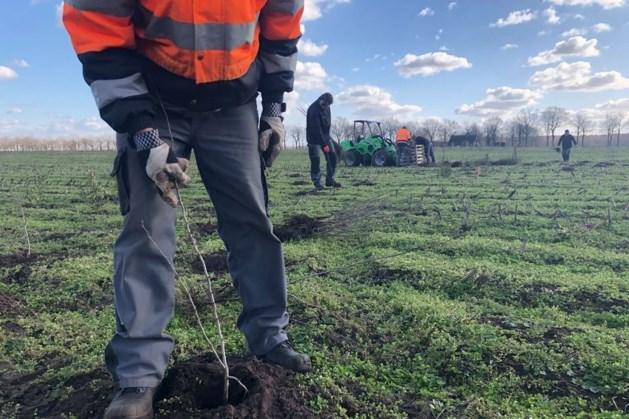 Duizenden jonge boompjes en struiken geplant in Weert