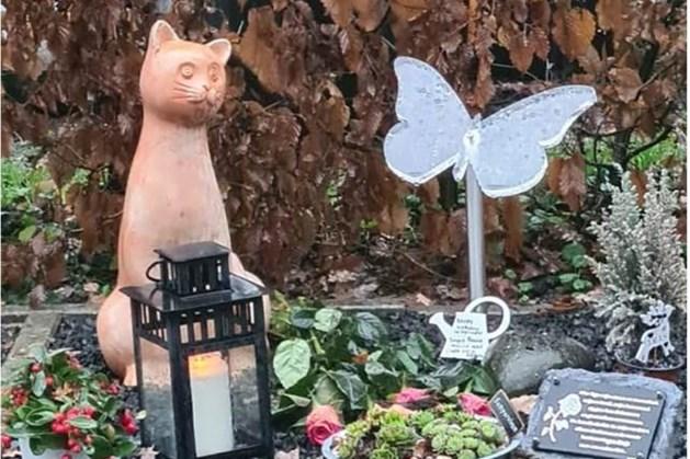 Video: Kattenbeeld gestolen van graf Marco uit Kerkrade, ouders diep bedroefd