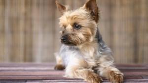 Liever hondje Frekkel in huis dan 30 miljoen: 'Voor onze kleine koning doe ik alles'