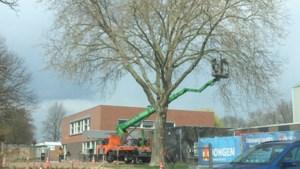 VSP plaatst vraagtekens bij onderhoud aan doorgeschoten bomen in Hekerbeek en Berg