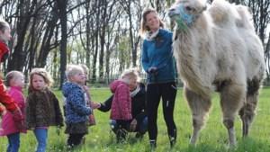 Tamar laat kameel Einstein kennis maken met de wereld en met kinderen