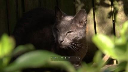 Video: Stadsecoloog lanceert opmerkelijk plan: avondklok voor katten
