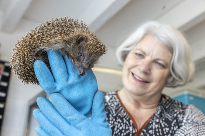 Limburgers met hart voor dieren: 'Met tranen in de ogen moest ik egels weigeren omdat de opvang vol zat'