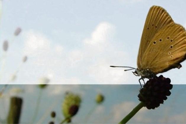 Vroege Vogels maakt opnames werkzaamheden leefgebied van donker pimpernelblauwtje
