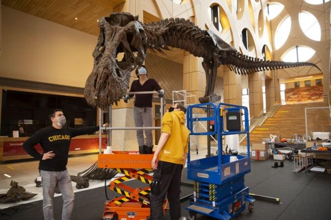 Niet-alledaagse klus: Hanneke uit Weert geeft op Japans verzoek tweede leven aan 66 miljoen jaar oude Tyrannosaurus rex