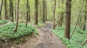 Motoren verstoren de rust in natuurgebieden Stein: 'Je zou bang worden om met de kinderen het bos in te gaan'