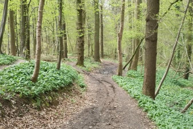 Motoren verstoren de rust in de natuurgebieden van Stein: 'Je zou bang worden om met de kinderen het bos in te gaan'