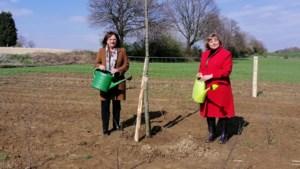 Eerst fase aanpak wateroverlast Oirsbeek klaar