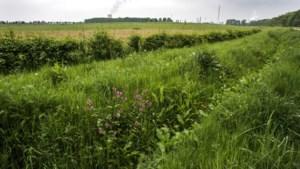 Wortels tasten Sabic-leidingen aan, 280 bomen in Heidekamppark tussen Stein en Urmond moeten wijken
