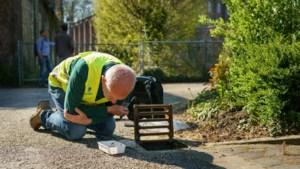 Inspecteurs NVWA speuren in Valkenburg naar tijgermuggen: 'Ze mogen geen kans krijgen om zich te verspreiden'