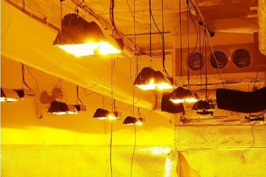 Golf aan hennepinvallen in Westelijke Mijnstreek: kwekerij ontmanteld in centrum Geleen, aanhoudingen in Stein