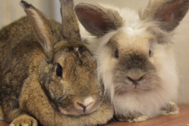 Dier van de week: moeder en zoon Bertha en Jantje zoeken samen een rustig plekje