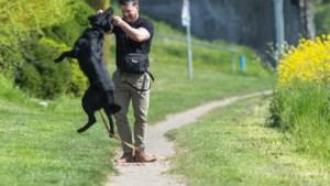 Steeds meer aandacht voor (jonge) oorlogsveteranen in Stein, hondengeleider uit Berg die in Kirgizië F16's bewaakte draagt steentje bij
