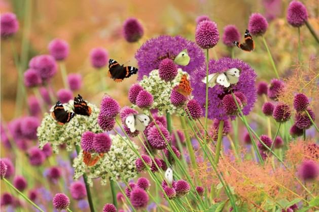 Gemeente Stein en IVN Elsloo zaaien bloemenrijke bermen