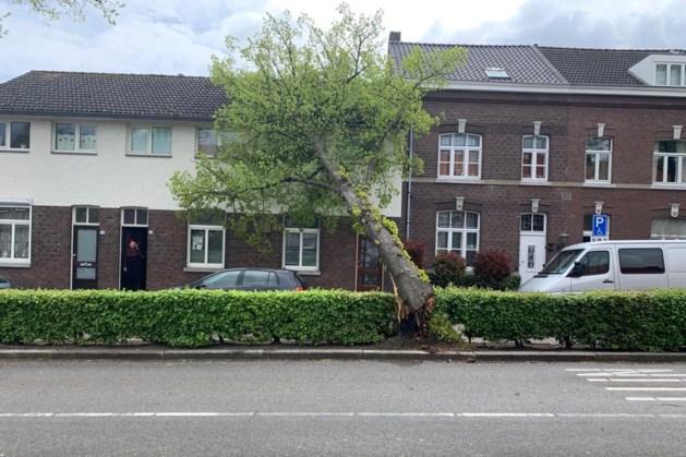 Video: Harde wind in Limburg: bomen en takken waaien tegen huizen