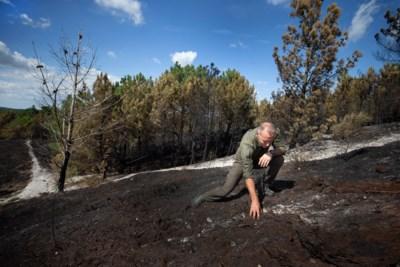 Brandweer moet uitrukken naar Brunssummerheide, tienduizend vierkante meter natuur afgebrand