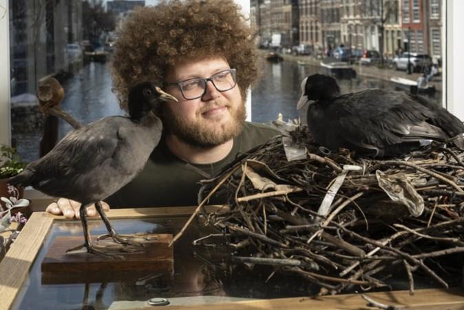 Natuur in Nederland: meerkoeten bouwen hun nestjes van plastic afval, maar waarom eigenlijk?