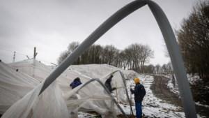 Witte nachtmerrie voor fruitteler Schaepkens in Klimmen: overkapping bomen stort in door sneeuw
