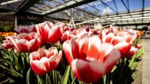 Bloemen fors duurder in aanloop naar Moederdag