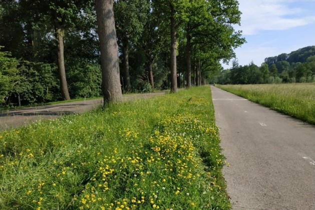Initiatiefgroep zoekt mooiste bloeiende wegbermen in Valkenburg en Gulpen-Wittem