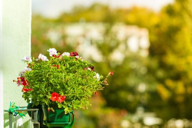 Dorpsraad vraagt inwoners Haelen om financiële bijdrage voor plantenhangers