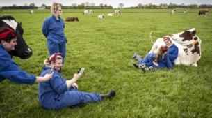 Knuffelen met koeien op Moederdag: 'Dit is tien keer beter dan Ibiza'