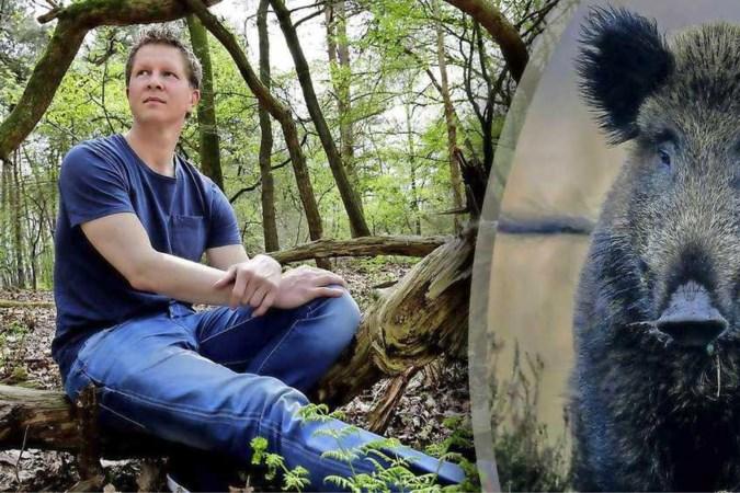 Wild zwijn valt gezin op Veluwe aan: 'Schieten eerst geen optie met kinderen erbij'