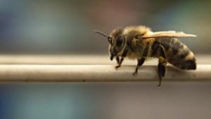 CNME Maastricht vraagt studenten om hulp bij ondersteuning bijen in Randwyck