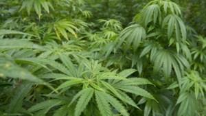 Loods bij bedrijfspand Gronsveld half jaar op slot na drugsvondst