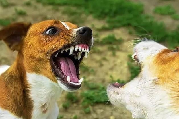 Wat te doen wanneer een huisdier betrokken raakt bij een bijtincident