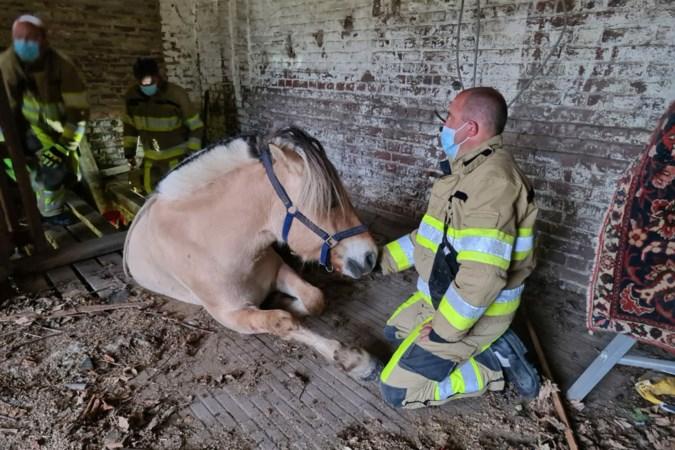 Brandweer helpt paard uit put in Beek