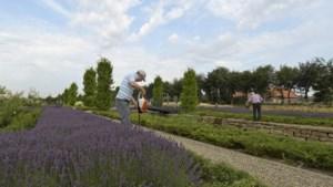 Vrijwilligers gezocht voor historische tuin Montfort