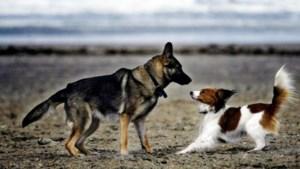 Meningen verdeeld over ravotterrein voor honden in Leunen