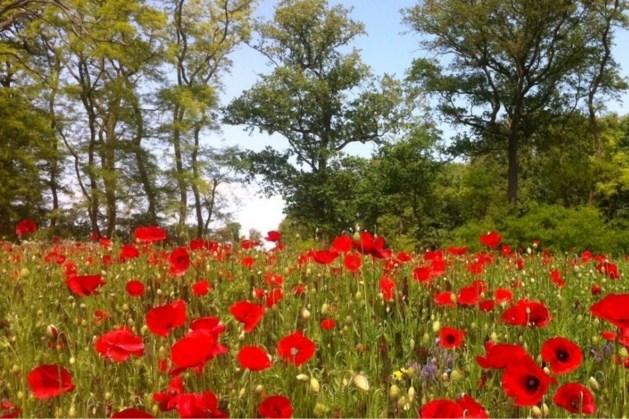 Randen en wegbermen ingezaaid met bloemenmengsels in gemeente Echt-Susteren