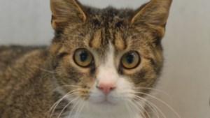 Dier van de week: kleine dame Froufrou zoekt geduldige kattenbaas die haar aan mensen wil laten wennen