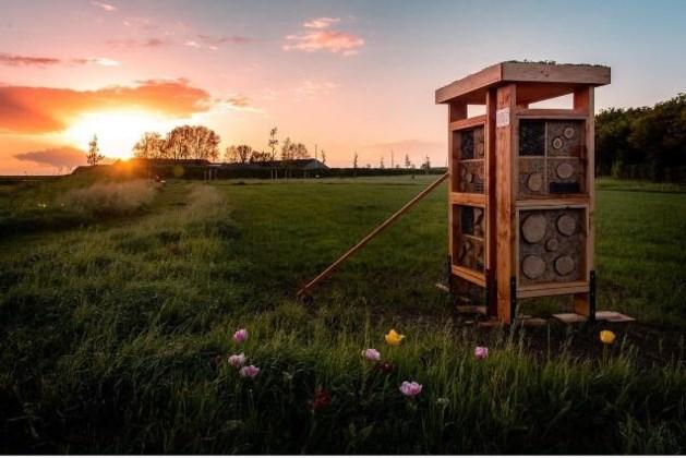 Bijenhotel geplaatst in Park West-Einde in Schinveld